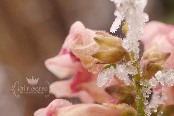 hoar frost flowers