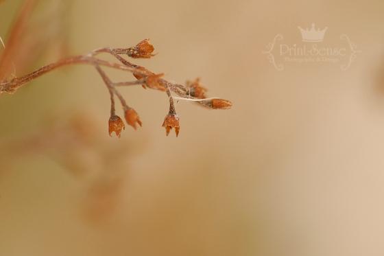 lilac winter print-sense photography