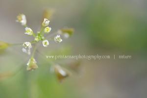 TinyWhiteStarburst_PrintSensePhotography2013 wb