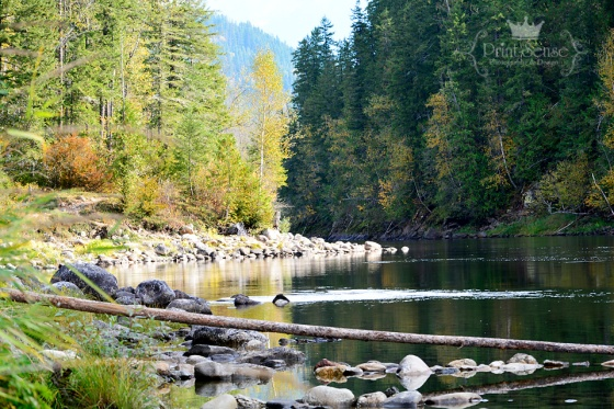 Fall colors shuswap river enderby british columbia Print-Sense Photography