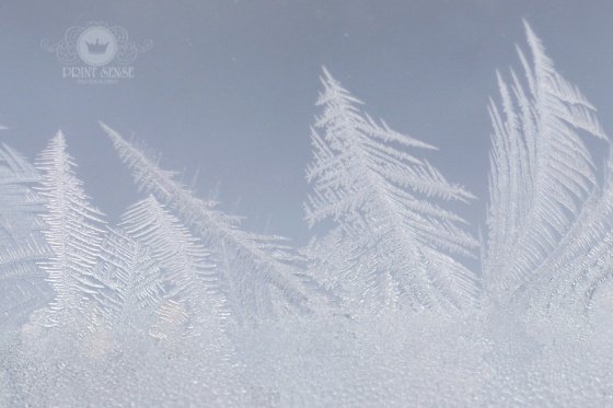 Frost on the window photo Print Sense Photography